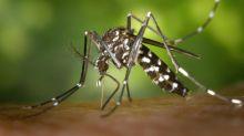 Zika, dengue: vigilance renforcée en métropole après le signalement de plusieurs cas