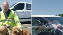 Firefighters rescue cockerpoo left locked in shopping centre car park for more than hour in sweltering heat