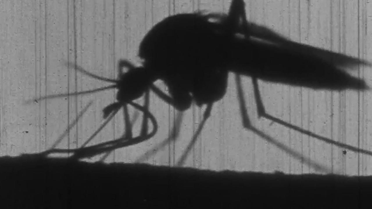 What If there were No Mosquitoes?