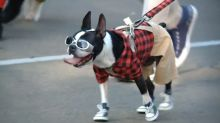 Pets Don Adorable Costumes For Holiday Parade
