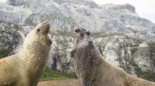 'Blue Planet II': See what happens when penguins come between battling elephant seals