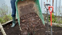 How to feed your soil in autumn for better veg in spring