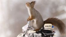 Cycling nuts! Squirrels enjoy playing on bicycles