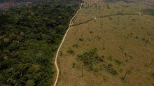 13 photos qui montrent l'impact de l'activité humaine sur les forêts