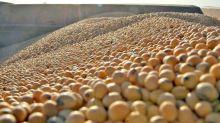 Mejores precios para la soja argentina, pese a la estabilidad de las cotizaciones en Chicago