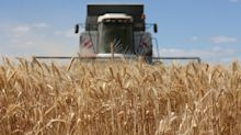 Russia's Slipping Wheat Yields Cast Doubt on Crop Outlook