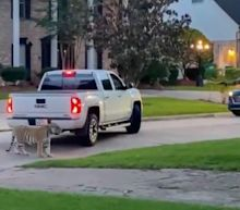 A Houston man was arrested after fleeing from his home with his pet Bengal tiger. The big cat is still running wild.