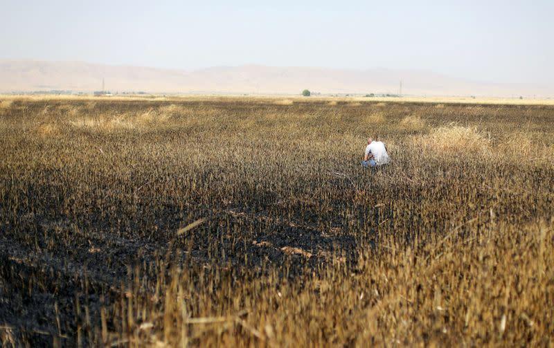 FILE PHOTO: A man checks a burnt wheat field in Qamishli