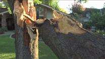 Lightning Splits Tree in Half