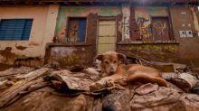 Sobe para 47 o número de mortos em Minas Gerais desde o início de temporais