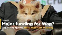Dog-walking app Wag may be raising a huge round of funding