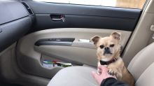 Dog refuses to let owner drive away