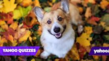 Can you name the 20 most popular dog breeds in the UK?
