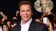 Elephant charges Arnold Schwarzenegger's car in South Africa