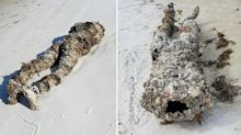 'Looks human': Woman's creepy find during beach clean-up