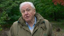 Las 7 medidas del legendario David Attenborough que detendrían el cambio climático en cuestión de décadas