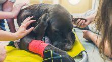 Certains propriétaires font cette erreur lorsqu'ils décident de faire euthanasier leurs animaux