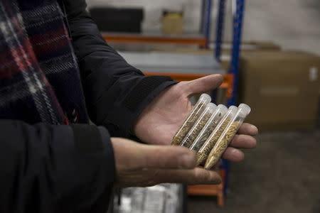 Asmund Asdal, Senior Adviser from NordGen, holds 4 different samples of rice seeds from the Philippines at the International gene bank Svalbard Global Seed Vault (SGSV) near Longyearbyen on Spitsbergen, Norway, October 20, 2015. REUTERS/Anna Filipova
