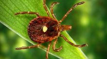 Tick makes people allergic to red meat