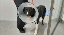 Man jailed after leaving dog in 'unimaginable pain' with elastic band wrapped around its head