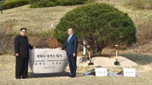 The pine and the poplar: a tale of two trees in the DMZ