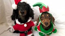 PHOTOS: Santa Paws is coming to town! Britain's most festive pets revealed.