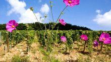 Le prof en liberté #40 – Le vin bio est-il meilleur?