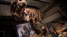 Tyrannosaurus rex found in Canada is world's biggest