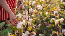 Boohoo to grow its own cotton in Pakistan