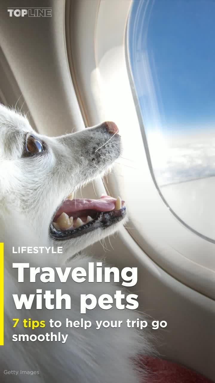 picture 7 Tips for Traveling with Your Pets