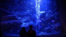 東京墨田水族館迎來春櫻!推出「櫻與水母」特別展~體驗全新光影迷幻空間!