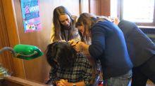 Perturbateurs endocriniens  : on arrache les cheveux d'Anne Hidalgo