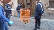 Furto pietre d'inciampo nel Rione Monti, indagano carabinieri