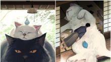 【圖集】日本「貓之日」人氣插畫師出圖 巨喵襲地球