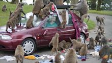 Baboons 'carrying knives and chainsaw' spotted in safari park