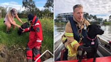 Dog rescued by firefighters after chasing ducks for a kilometre