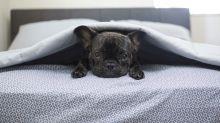Mantén segura a tu mascota cuando quede sola en casa