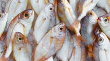This 11-year-old boy reportedly died of an allergic reaction after smelling fish