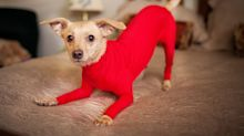 Dog Leotard's Exist