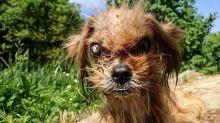Debilitado, cãozinho resgatado passa por transformação surpreendente
