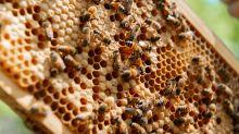 """Daniel Cady fala sobre apicultura em casa: """"Fuga na quarentena"""""""