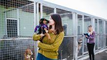 So will Stuttgart die Bürger animieren, Hunde aus dem Tierheim zu adoptieren