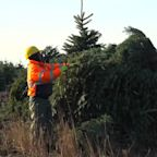 Demand for real Christmas trees up during pandemic