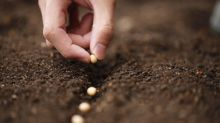 Hundreds of Americans planted those alarmingly mysterious Chinese seeds. Others ate them.