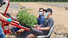 Four cents per gram? Outdoor pot is piling up in a 'constipated' market