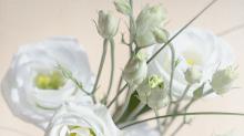 雙宋婚禮佈滿浪漫巧思!你知道桔梗花的花語和傳說嗎?