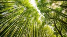 Which trees are best for combating carbon emissions?