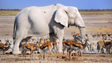 Amazing photographs of rare white animals
