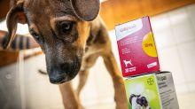 Medicina para perros se agota por un rumor de que cura el cáncer y los médicos están preocupados