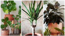 The biggest indoor plant trend of 2020
